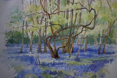 Bluebell wood large