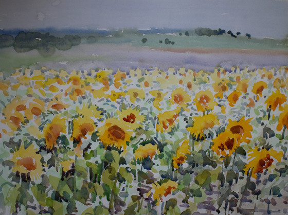 Sunflower field large