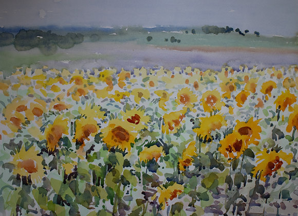 Sunflower Field (large)