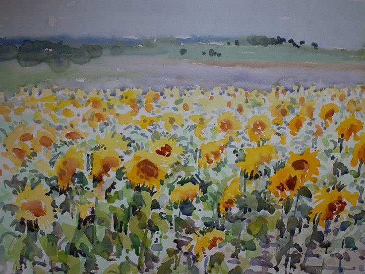 Sunflower field large