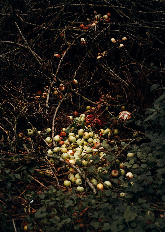 Nadja Ellinger - Path of Pins.jpg