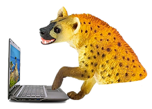 hyena pic.png