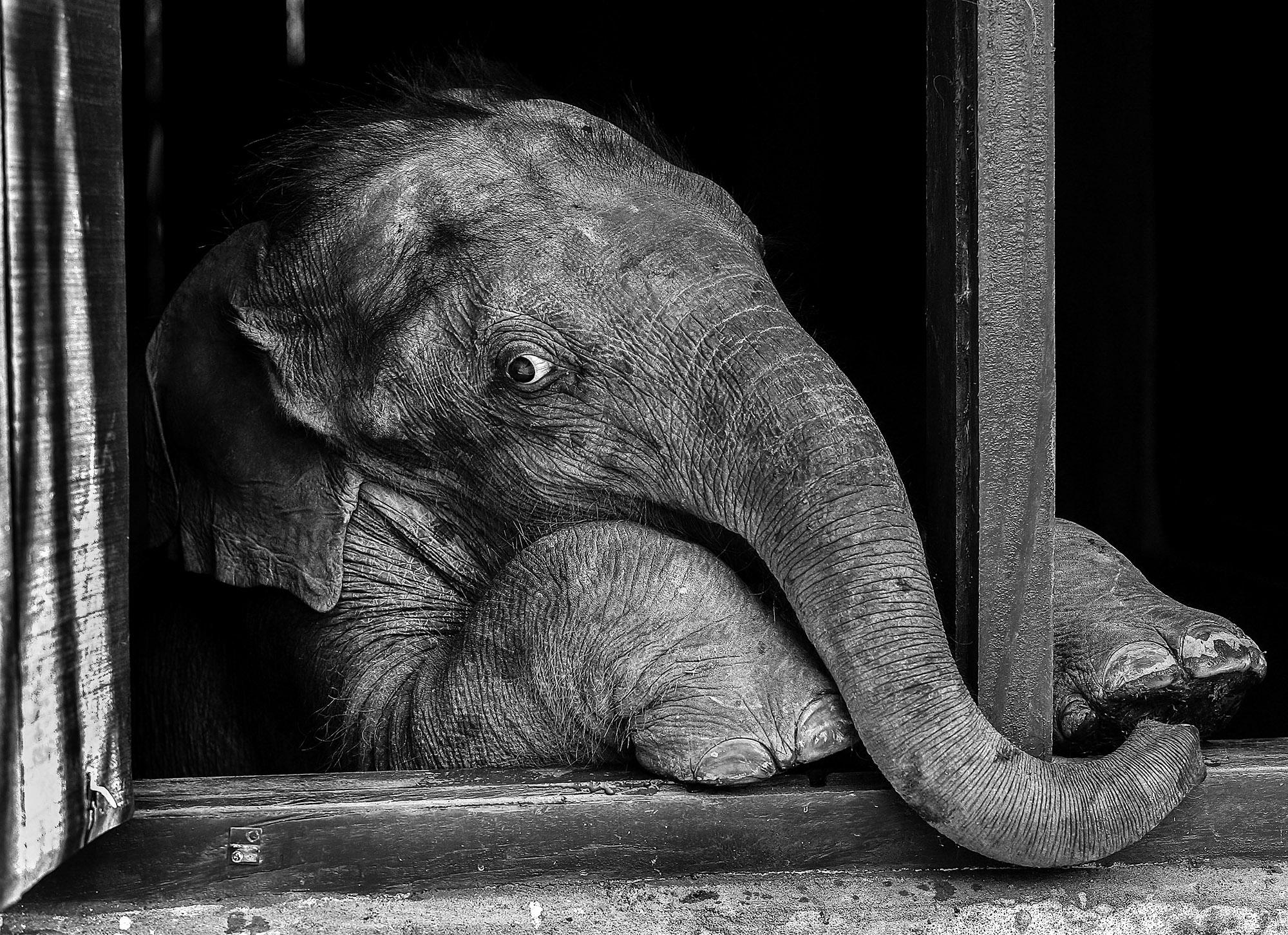 Orphan_Elephant