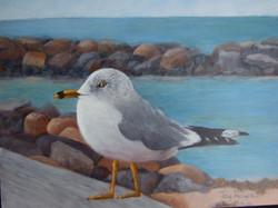 Gull of My Dreams