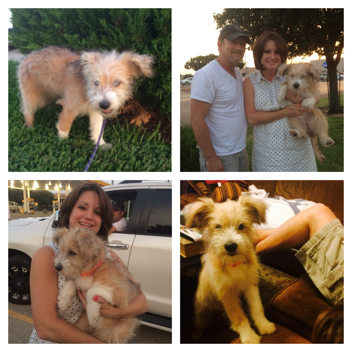 Dixie (was Franky) and her family
