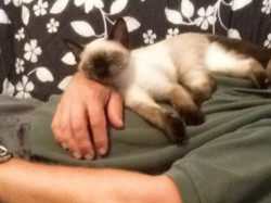 Sophie relaxing with her new dad!