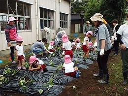 豊府幼稚園芋植え.JPG