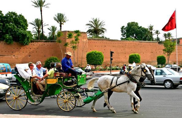 maroc pic horse car.jpg