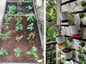 Personal journeys of urban farming: reflections from the UPAGrI team