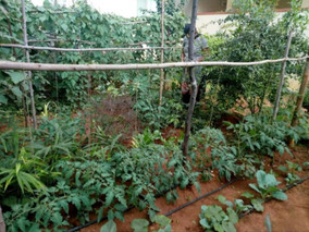 A Post-Pandemic Approach to Urban Agriculture in India