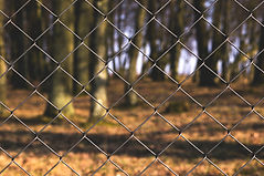 Canva - Black Steel Fence With Tree Trun