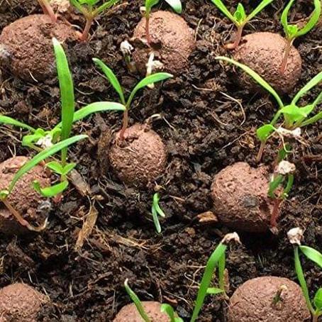Las bolas de arcilla con semillas