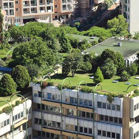 Techo verde - un poco de vegetación entre tanto cemento
