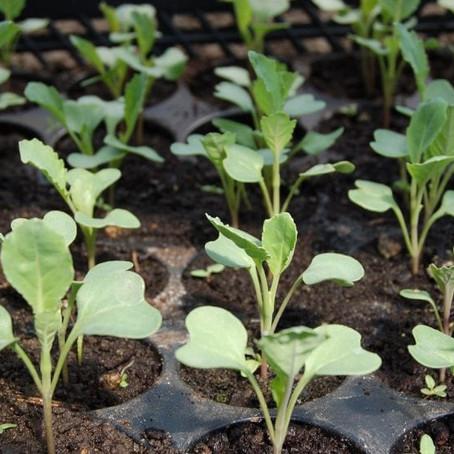 Como empezamos a cultivar?