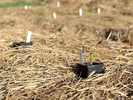 El mulch - la cobertura del suelo
