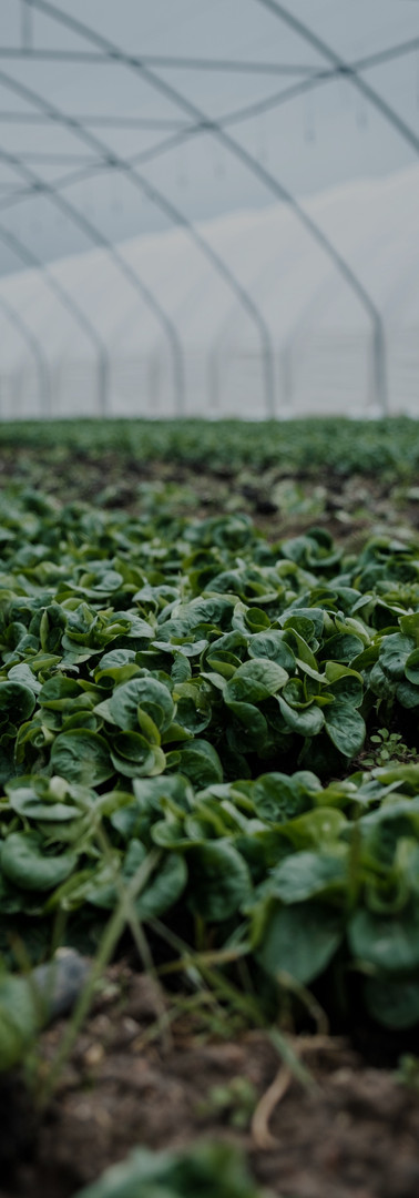 Green Crops_edited.jpg