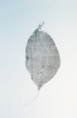 leaf reconstruction side a
