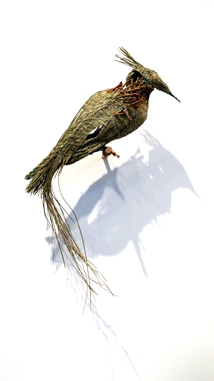 longleafwovenbird