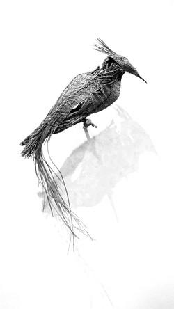 longleafwovenbirdblk&wht