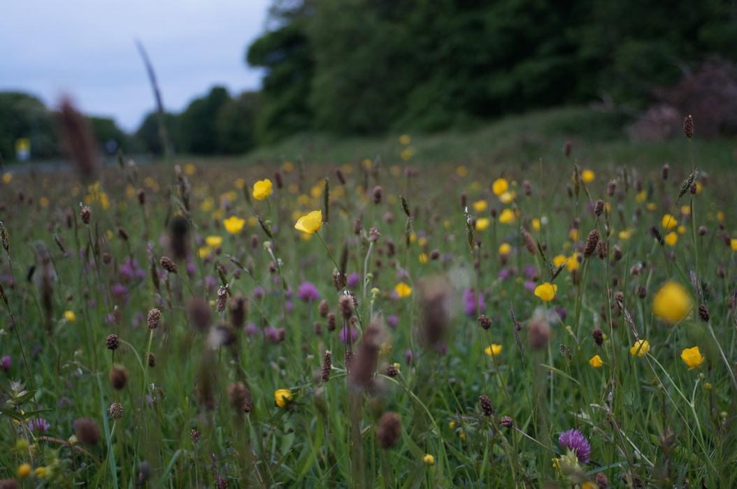 Connaitre les acteurs de la biodiversité en Normandie