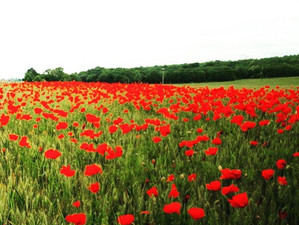 Recipe for a Perfect Poppy Day Cycle Ride pic.twitter.com/7jMMmnmBCm #tea and #cake