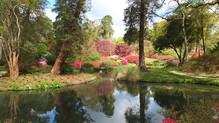 Springtime at Exbury Gardens