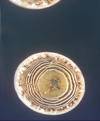 goldbluespiral.png