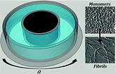 Shear-induced amyloid fibrillization: the role of inertia