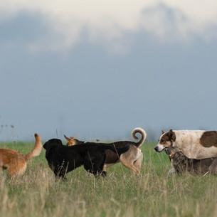 Presentaron plan del Instituto de Bienestar Animal con énfasis en registro y control reproductivo