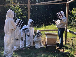 current bee garden.jpg