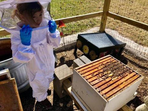 spring 2021 bees 15.jpg