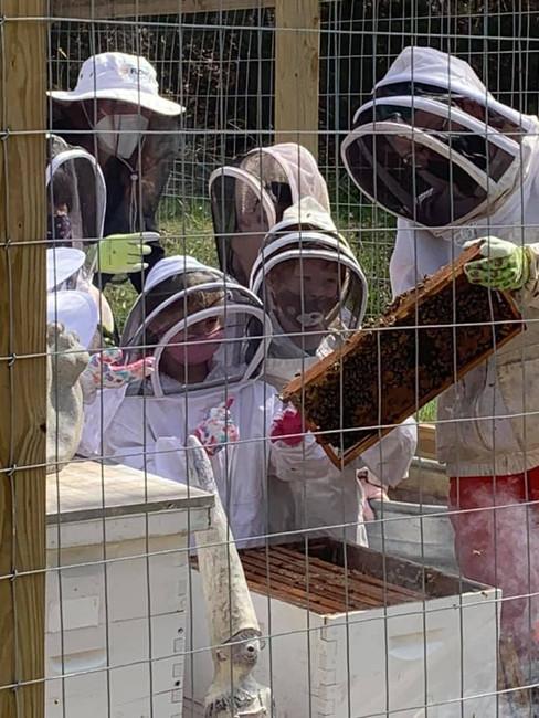 spring 2021 bees 12.jpg