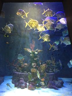 Atlantis Nassau,