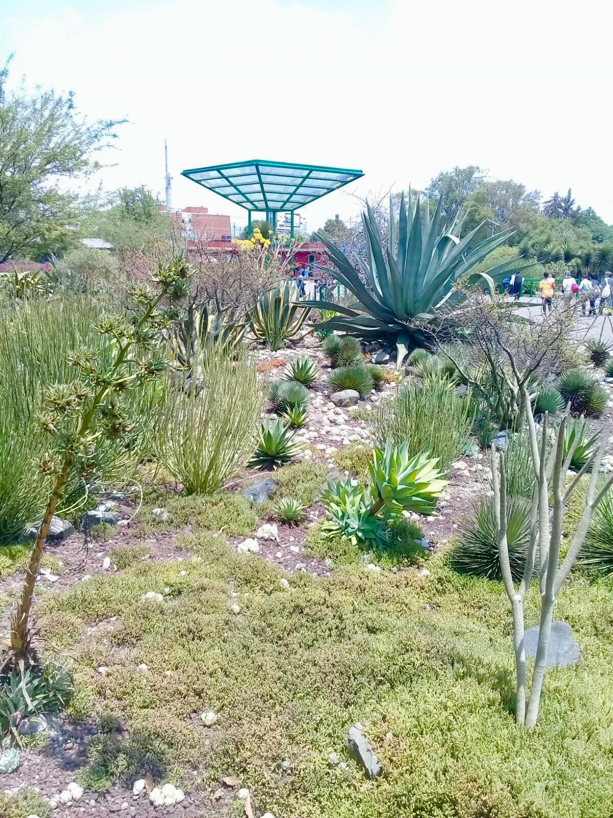 Jardin cactáceo