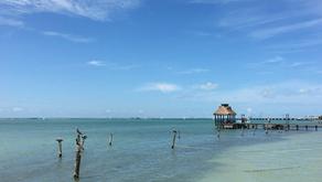 Isla Aguada Campeche, santuario natural de delfines y aves