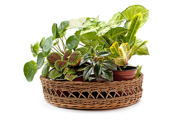 Foliage Basket