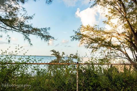 TSP_Nassau I Saw Pt 3-2.jpg