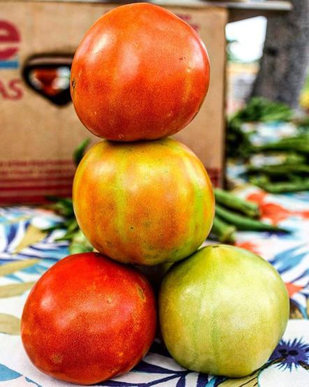 Bahamian-grown tomatos