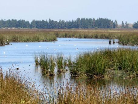 Aprueban creación de cuatro nuevos santuarios de la naturaleza en Chiloé