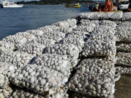 Marea roja amenaza actividad pesquera en Chiloé