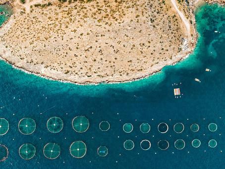ONU: ¿Cómo puede contribuir la acuicultura a acabar con el hambre?