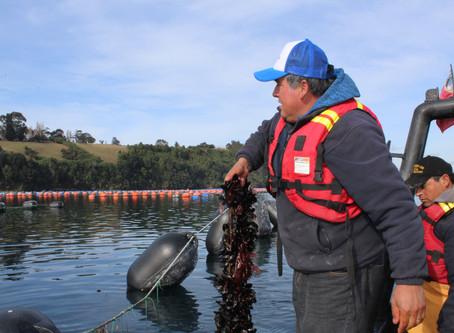FAO realizará conferencia mundial sobre acuicultura