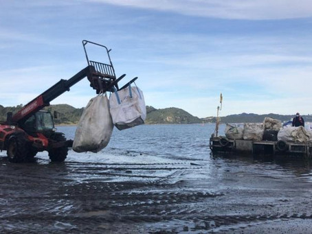 AmiChile hace llamado a mitilicultores a mantener las playas limpias