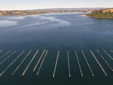 Marzo 2021: Camanchaca alcanza certificación ASC para 12 mil toneladas de mejillones