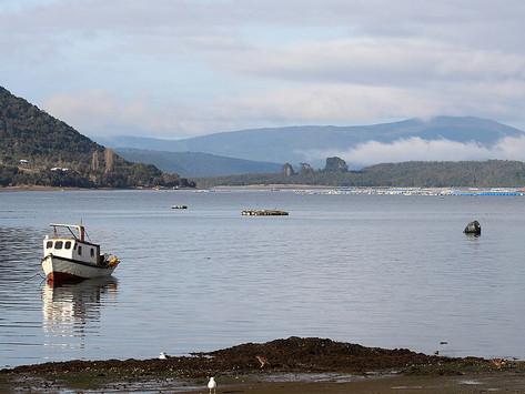 Mitilicultores piden a las autoridades que se cumpla la Política Nacional de uso del Borde Costero