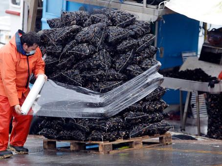 Galicia: La pandemia provocó un desplome del 20 % de las ventas de mejillón en fresco
