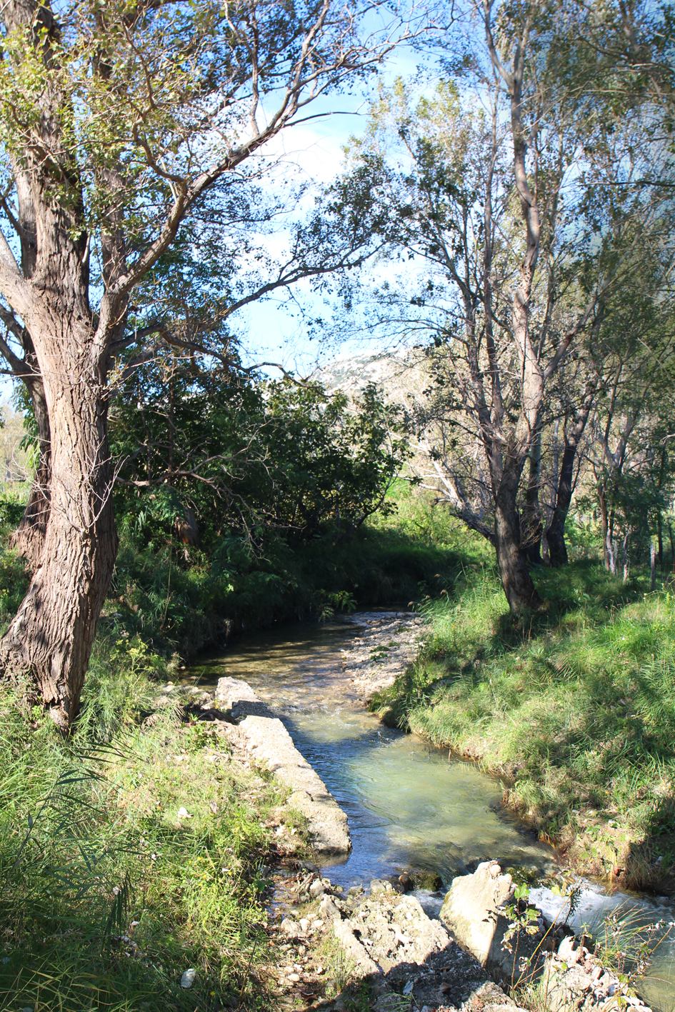 Flora and Fauna in Baska, Krk