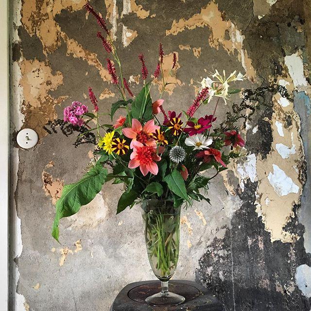 Högsommar och tidig höst växer ett överdåd av blommor i odlingarna och i trädgården. Nu kan vi frossa i stora maffiga buketter av dahlior, astrar, rosor, rosenskära, eterneller o.s.v.