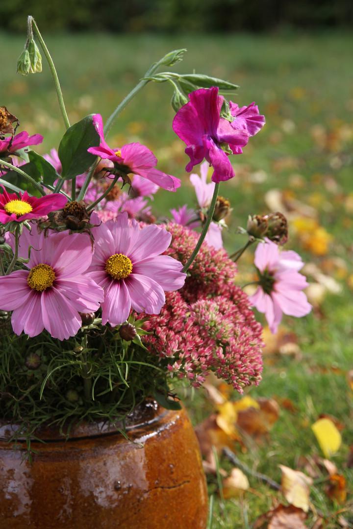 Det finns arbetshästar i blomvärlden och här är några exempel på såna, rosenskära, luktärt och kärleksört. De blommar och blommor och när höstlöven faller så fortsätter de blomma. Dessutom står de länge i vas.