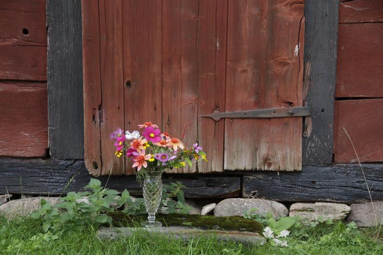 Vi bor på en gammal gård med en del välbevarade byggnader. De är slitna av tiden och väder och vind men ack så vackra. Det är en perfekt bakgrund till blommor. Att gå ut i trädgården och plocka ihop en bukett är så beroendeframkallande. Som massa karameller som lyser och gör en glad. Jag vill göra människor glad med blommor. Och så vill jag dela med mig av den här platsen vi bor på.